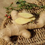 Plantas curativas y medicinales con las que deberías rodearte