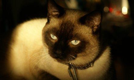 Descubre como los gatos te protegen de las malas energías y los malos espíritus