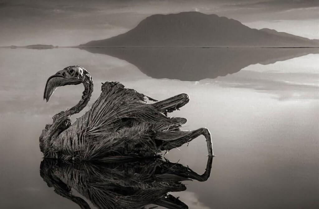 Lago Natrón