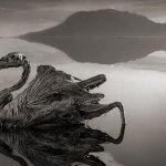 El espeluznante lago que petrifica a sus víctimas